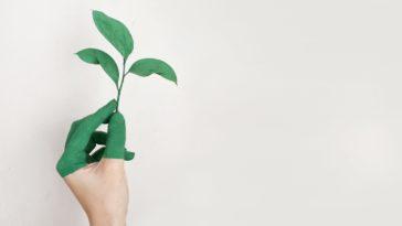 écologie protection environnement