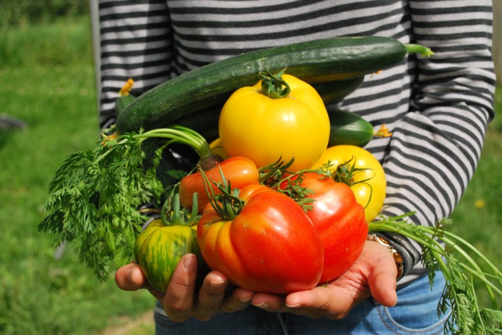 legumes permaculture