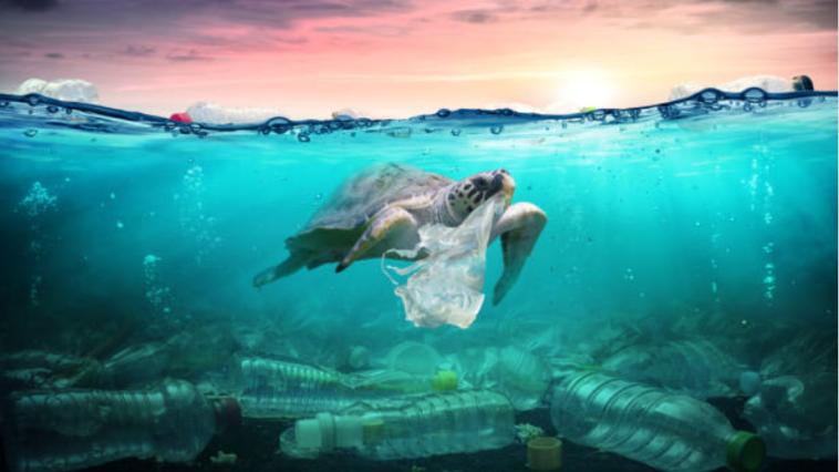 tortue déchets mer eaux pollution