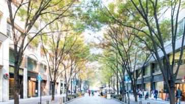 arbre ville