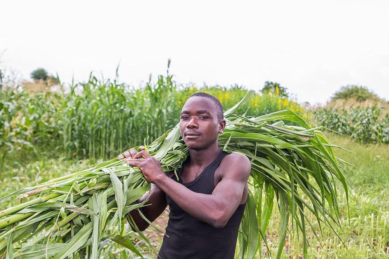 agriculture_Zimbabwe