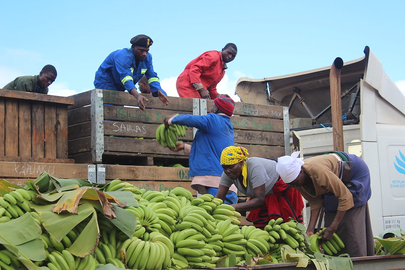 banana farmers Zimbabwe