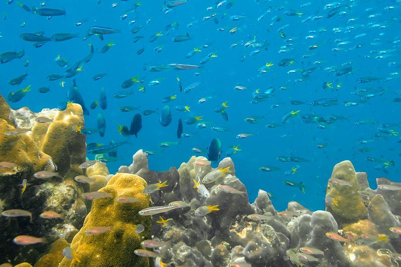 corail thailande